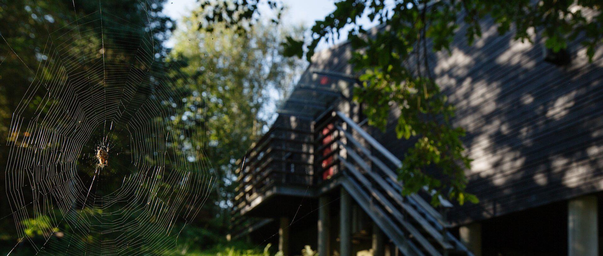 Sommerhus med edderkop